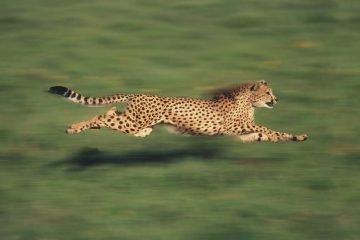 ABBYY-LS' SmartCAT Enters the CAT Race