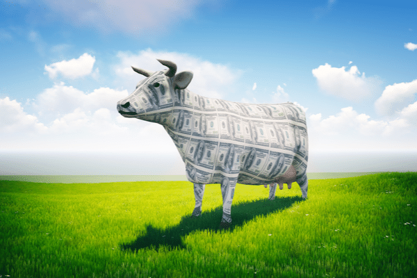 Rozetta Calls Machine Translation Its 'Cash Cow' in Earnings Report